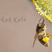 Včielka Maja :)