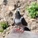 král vtákov