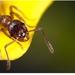 mravček 2