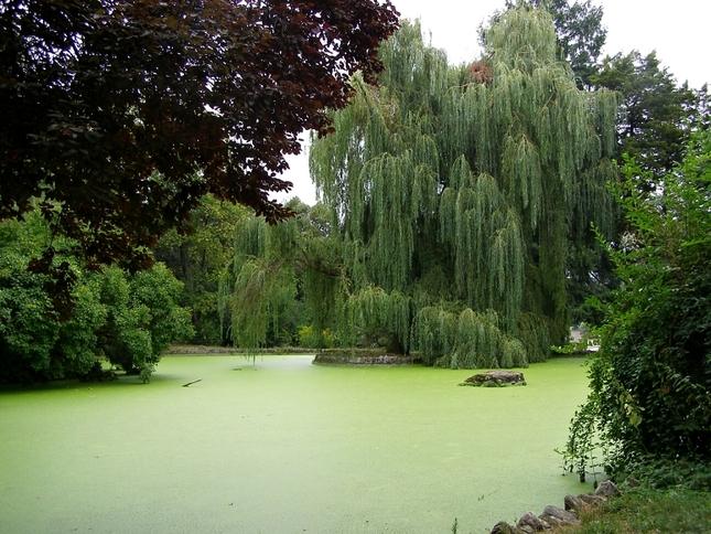 Jazierko v zelenom šate