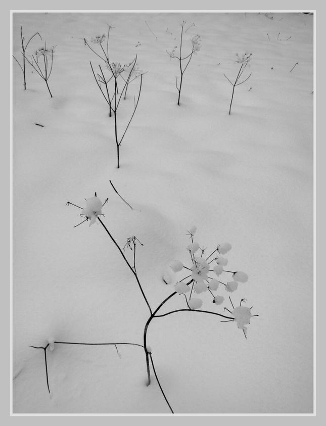 Snehové kvietky