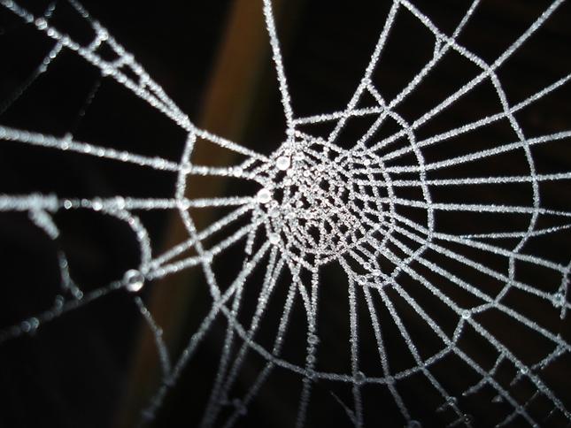 Mrazivá pavučina