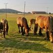 Kone na Podkylave