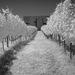 vinica specialne na biele vina:)