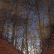 zrkadlo lesa