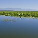 pokoj Skadarskeho jazera