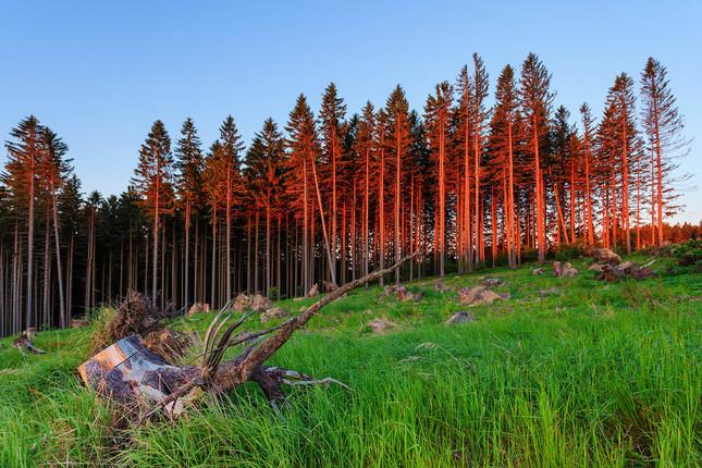 podvečer kdesi horiace lesy