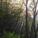 súľovským lesom