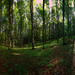 jarným lesom
