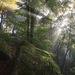 súľovským lesom 2