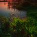 v rybníkových trávach