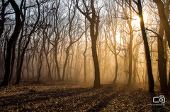 Zoborské lesy