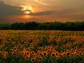 Západ slnka nad poľom