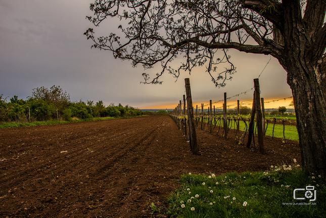 Jarno viničná