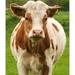 (kravo)portrét