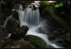 Tvary vody