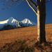 Strom a dva vrcholy