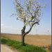 stromcek