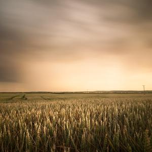 Summer field after a storm II