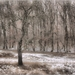 čarovný strom
