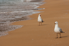 Rande na pláži