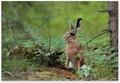 Zajac dekoracny