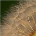 zlaté slnko