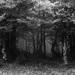Kto sa bojí nech nechodí do lesa