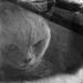Dead cat ghost