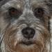 Korka-psia dáma v rokoch