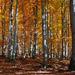 Jesenné šapitó
