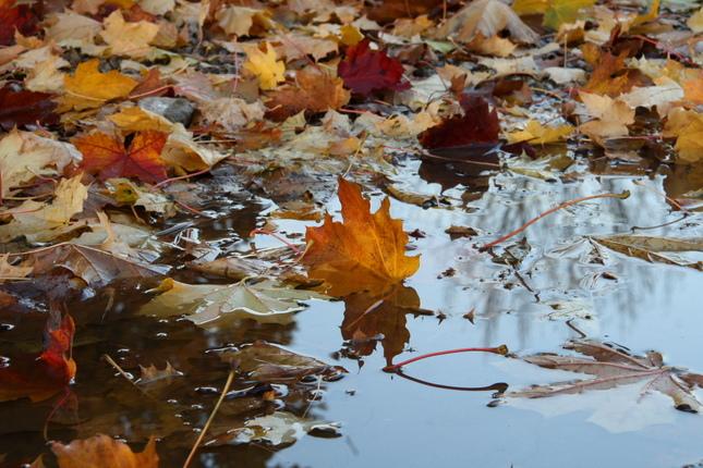 jesenné rapsódie V