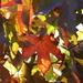jesenné rapsodie - pocta kráľovi