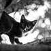 mačka stromová