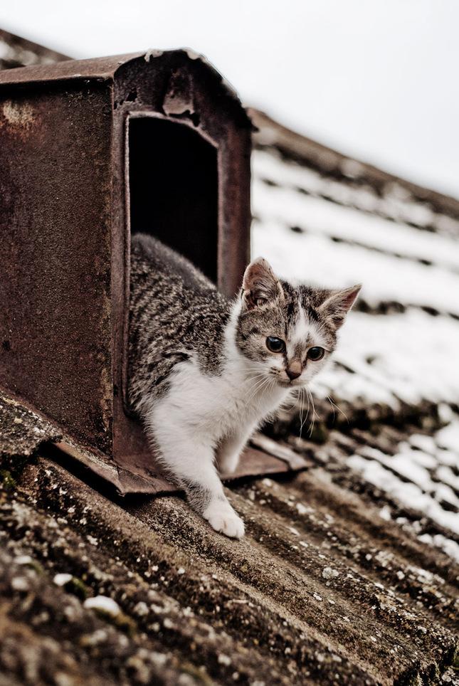 perfektné mačička zábery