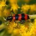 pekný chrobáčik