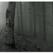...v lese