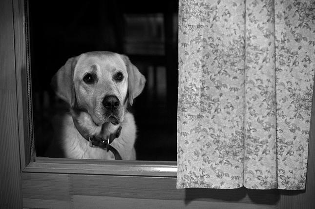Smiem ísť dnu??
