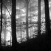 Sninský prales II
