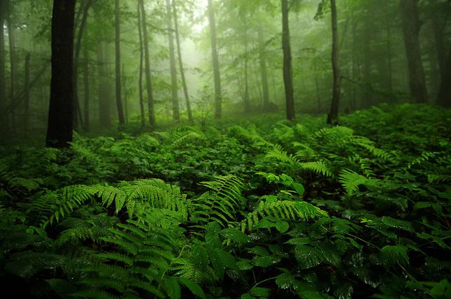 Sninský prales