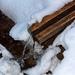 Lesný hučok
