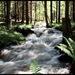 Kubašská voda tá rieka..