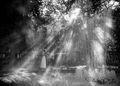 Láska v daždi.