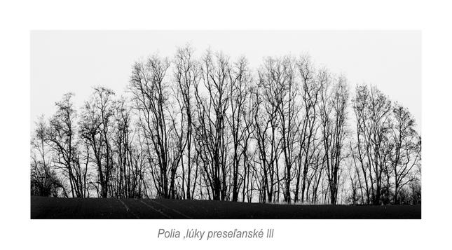 Polia ,lúky preseľanské III