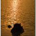 Zlaté jazero