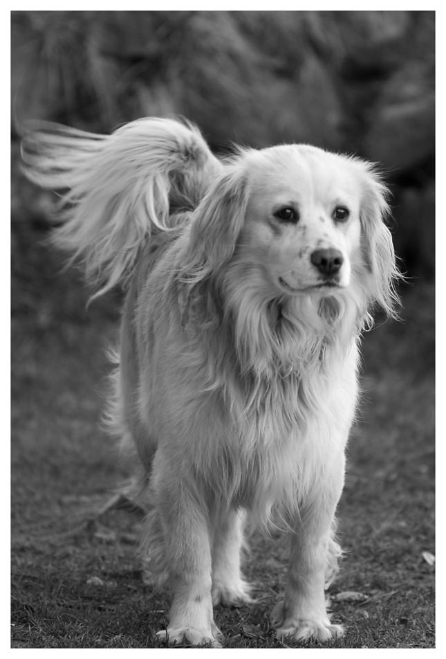 krásny pes
