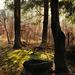 Tajomstvo lesa
