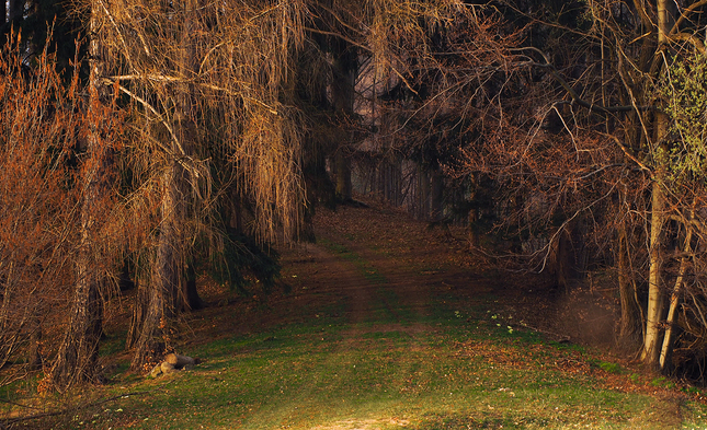 Cestou do temného lesa.