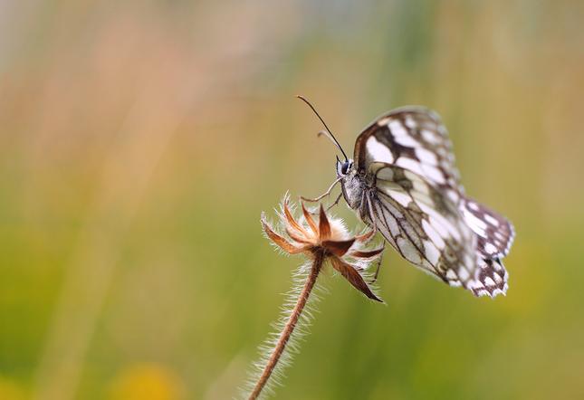 Krídla.