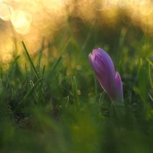 Skrývajúc sa v tráve.